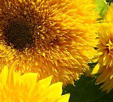 Yellow Bright SunFlower Garden Floral Baslee Troutman by BasleeArtPrints