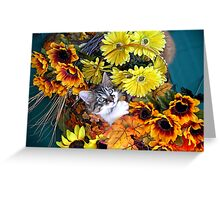 Venus ~ Cute Kitty Cat Kitten in Decorative Fall Colors Greeting Card
