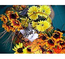 Venus ~ Cute Kitty Cat Kitten in Decorative Fall Colors Photographic Print