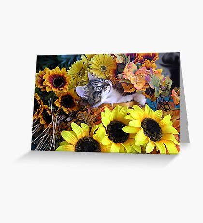 Venus ~ Serenity ~ Fall Kitty Cat Kitten with Sunflowers Greeting Card