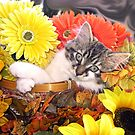Venus ~ Dreamy ~ Fall Kitty Cat Kitten in Flower Basket by Chantal PhotoPix