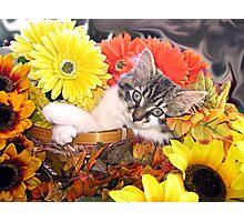 Venus ~ Dreamy ~ Fall Kitty Cat Kitten in Flower Basket Photographic Print