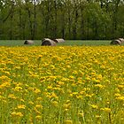 Hay Bales and Goldenrod by Sheryl Gerhard