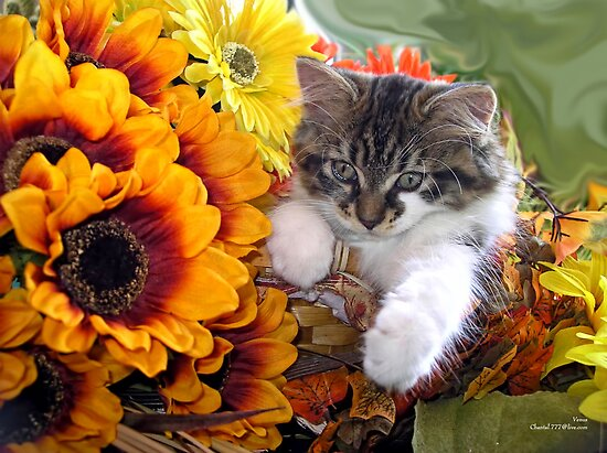 Venus ~ Cute Kitty Cat Kitten in Fall Sunflowers and Gerberas by Chantal PhotoPix