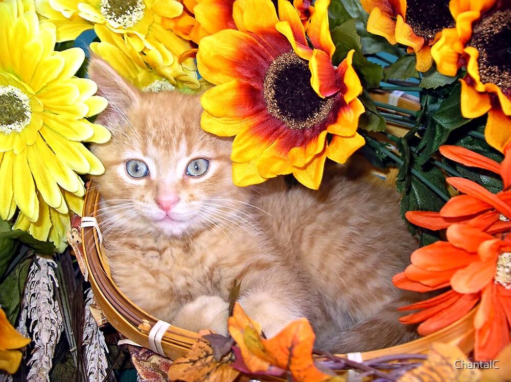 Di Milo ~ Sunflower Basket ~ Cute Kitty Cat Kitten by Chantal PhotoPix