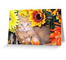 Di Milo ~ Sunflower Basket ~ Cute Kitty Cat Kitten Greeting Card