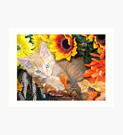 Di Milo ~ Cute Kitty Cat Kitten in Decorative Fall Colors Art Print