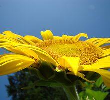 Sunflower Floral Garden art prints Blue Sky by BasleeArtPrints