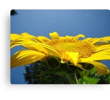 Sunflower Floral Garden art prints Blue Sky Canvas Print