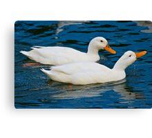 Domestic Duck Canvas Print