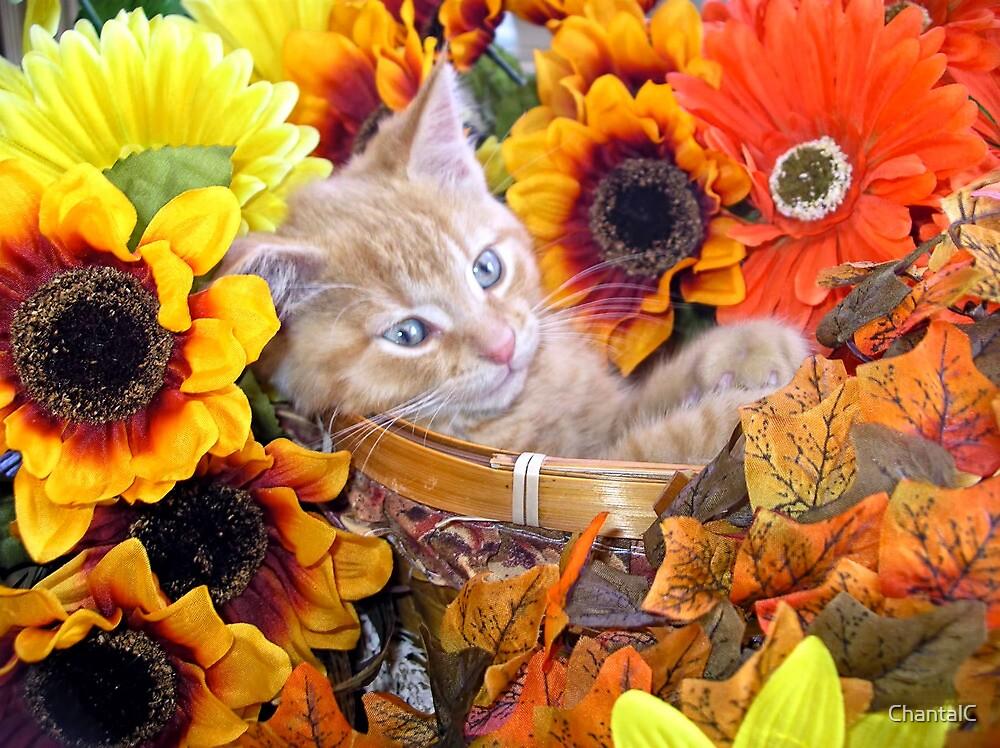 Di Milo ~ Cute Kitty Cat Kitten in Decorative Fall Flowers by Chantal PhotoPix