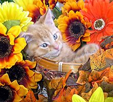 Di Milo ~ Cute Kitty Cat Kitten in Decorative Fall Flowers by Chantal PhotoPix