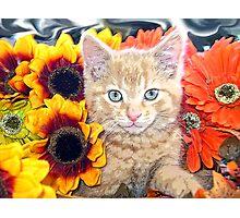Di Milo ~ Gaze ~ Fall Kitty Cat Kitten in Gerbera Flowers Photographic Print
