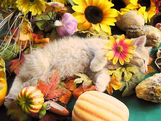 Di Milo ~ Flower Child ~ Kitty Cat Kitten in Fall Colors by Chantal PhotoPix