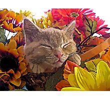 Di Milo ~ Cute Kitty Cat Kitten in Decorative Fall Colors Photographic Print