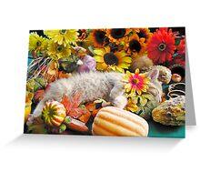 Di Milo ~ Kitty Cat Kitten Sleeping ~ Fall Harvest w/ Gourds & Pumpkins Greeting Card