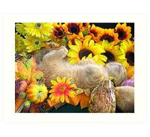 Di Milo ~ FAll Autumn Harvest ~ Tabby Kitty Cat Kitten Art Print