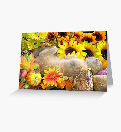 Di Milo ~ FAll Autumn Harvest ~ Tabby Kitty Cat Kitten Greeting Card