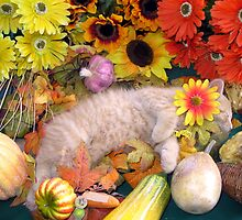 Di Milo ~ Peaceful Dreams ~ Fall Kitten by Chantal PhotoPix