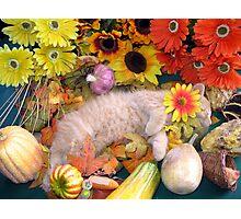 Di Milo ~ Peaceful Dreams ~ Fall Kitten Photographic Print