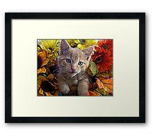 Di Milo ~ Perplexed ~ Fall Kitten Framed Print
