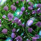 Bubbly Chives by Debbie Robbins