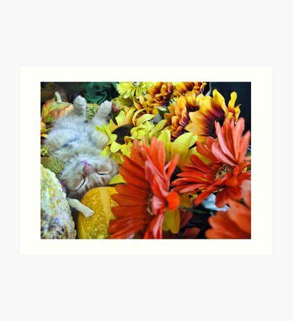 Di Milo ~ Autumn Harvest ~ Kitty Cat Kitten in Fall Colors Art Print