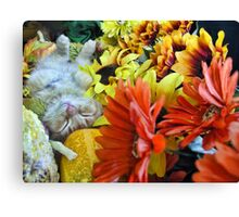 Di Milo ~ Autumn Harvest ~ Kitty Cat Kitten in Fall Colors Canvas Print