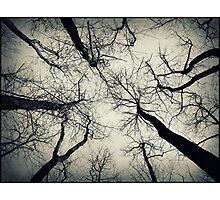 Desolation Photographic Print