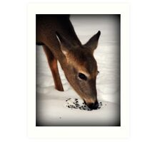 Winter Doe Art Print