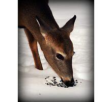 Winter Doe Photographic Print