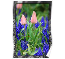 Tulips in Frame 1 Poster