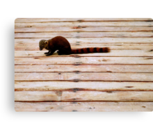 Stripes: Red-tailed mongoose Canvas Print