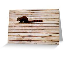 Stripes: Red-tailed mongoose Greeting Card