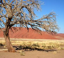 Tree and Dune, Sossusvlei, Namibia by Margaret  Hyde