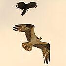 Bird interaction ! by jozi1