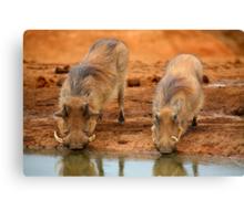 Warthogs At Waterhole Canvas Print