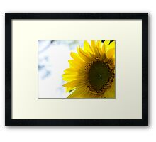Sring Sunflower Framed Print