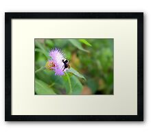 Busy Bumble Bee Framed Print