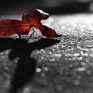 Autumn Reds by pnjmcc