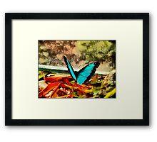 Monarch in Blue Framed Print