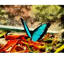 Monarch in Blue Photographic Print