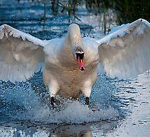 Swan simple landing by THHoang