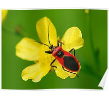 red and black bug Poster