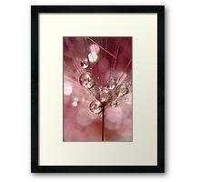 Dandelion Explosion Framed Print