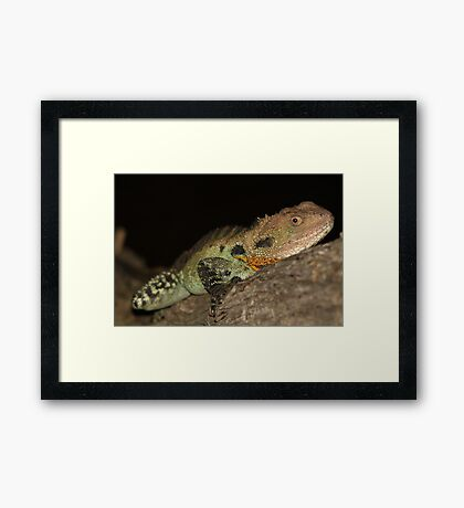 Gippsland Water Dragon Framed Print