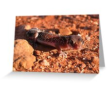 Thick-tailed Gecko Greeting Card