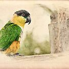 Parrot Sketch by ©FoxfireGallery / FloorOne Photography