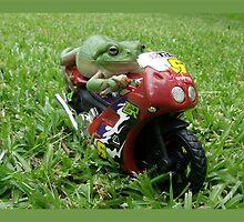 Steady Frog by jono johnson