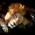 Hard Life for a King by Josie Eldred